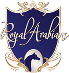 Royal Arabians